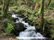Bosques terapéuticos