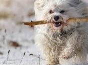 Consejos caninos 'Ene 2016'