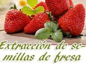 Germinar fresa desde semillas.