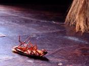 ¿Cómo eliminar plaga cucarachas casa?