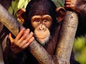 ¿Qué significa soñar monos?