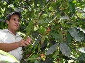 #Cuba Empresa agroforestal Buey Arriba mejor Granma