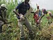Miles centroafricanos huyen terror