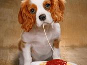 Verdades nutrición perro (33): estúpida pirámide alimentación humana