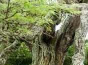 árboles notables