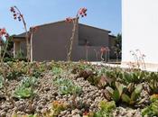 Cubierta vegetal: aspectos tener cuenta proyecto