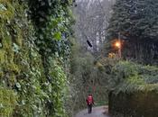 Camino Finisterre. Etapa Santiago Negreira