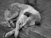 registran muertes perros Luis Potosí frío