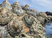 Explorando incomprensibleMoluscos gasterópodos extin...