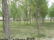 Arboledas bosques