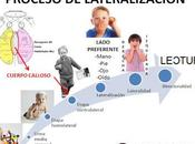 LATERALIDAD Proceso lateralidad lateralización relación desarrollo visión