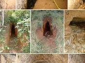 Opiliones cuevas artificiales Brasil