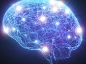 abuso sexual efectos cerebro femenino, estudio animales