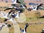 gran hazaña migración