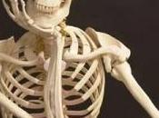 ¿Cuántos huesos tiene cuerpo humano?