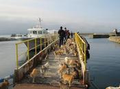 Aoshima, pequeña isla situada Japón, con...