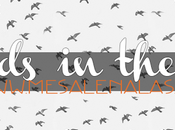 Birds blog
