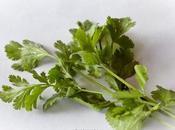Cilantro: condimento anticáncer antioxidante