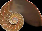 falsa curva Fibonacci