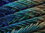 iridiscentes extraordinarios detalles plumas pavo real capturadas microscopio