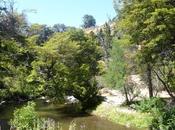 motivos para visitar Parque Nacional Alerces