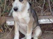 Kiko necesita acogida adopcion