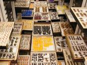 magnificas colecciones científicas Museo Nacional Historia Natural