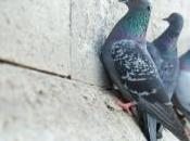 ¿Cómo ahuyentar espantar palomas? Ideas
