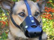 Descubre Cómo Hacer Bozal para Perro pasos
