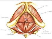 Embarazo activo: fitball, cinturón pélvico Yoga.