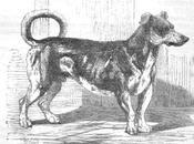 perro servía motor para asador
