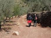 Antiguo camino entre Vall Almonacid Matet