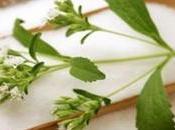 Azucar Abedul (Xylitol), ¿Edulcorante natural seguro?