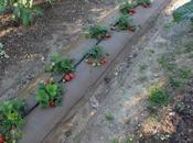 Comienza temporada frutas huerto