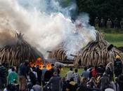 Kenia quema colmillos marfil valorados millones para salvar elefantes