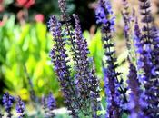 Aguas florales: Excelentes tónicos naturales