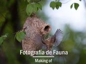 Fotografía fauna making