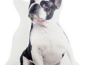 Cojines originales: cojín gato bulldog