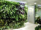 Conjunto jardines verticales interior para oficinas Madrid
