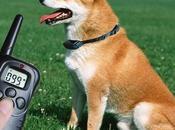 Collar Eléctrico para Perros. Todo Debes Saber