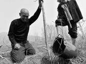 ciego hombre brazos plantan 10.000 árboles.