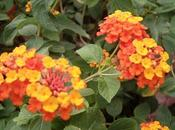 jardín colores