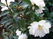 Arbustos flores maceta