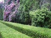 Bayas hojas jardín