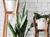 Deco: Cactus palmeras, ideas para vida salón