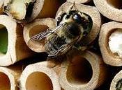 Insectos beneficiosos para Huerto