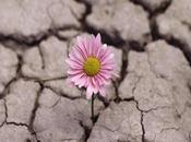 Tenacidad resiliencia