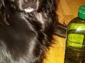 Trucos aceite oliva para perros