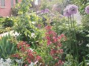 Weigelia 'Bristol Ruby' florida 'Variegata'