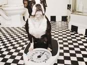 Obesidad Canina: Causas, Tratamientos Consecuencias
